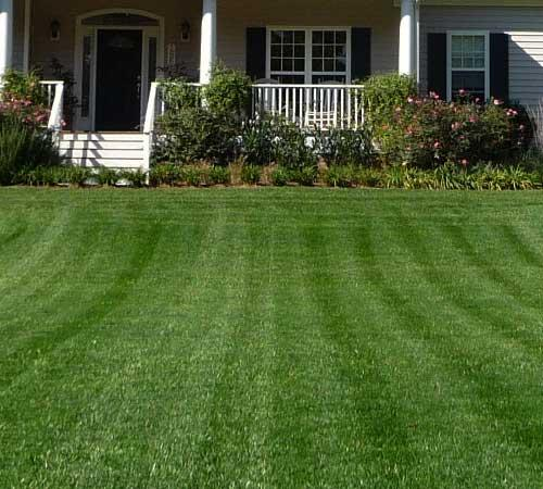 Overseeding helps keep your lawn healthy and beautiful