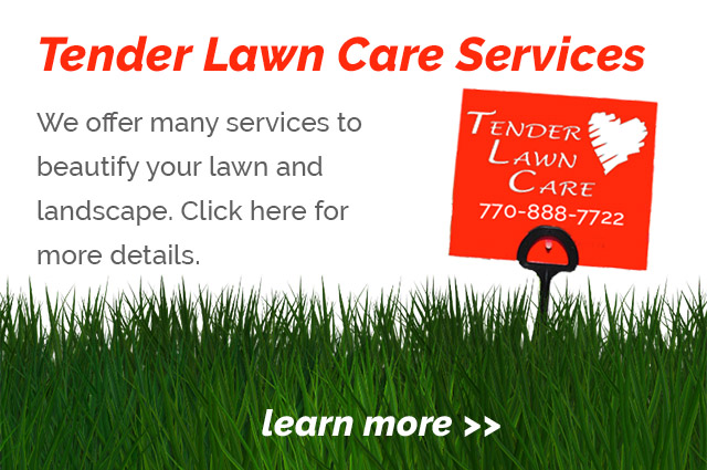 View our lawn care services