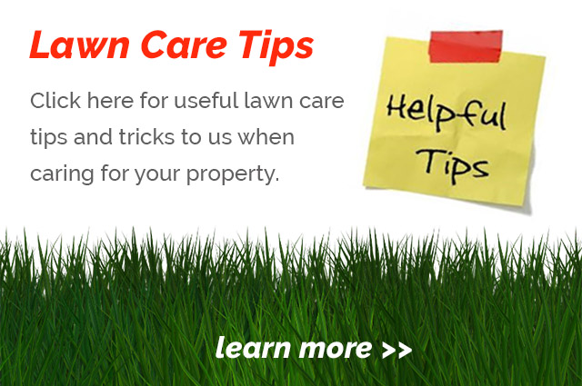 View lawn care tips and tricks